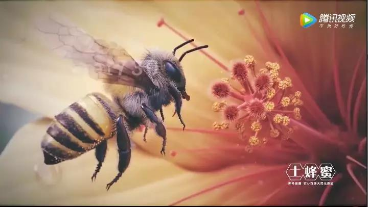 新化哪里有正宗的蜂蜜买,新化买蜂蜜请找我
